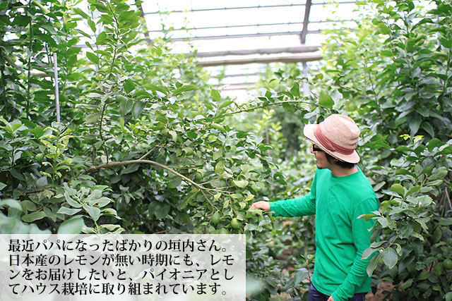 国産ハウス栽培レモン