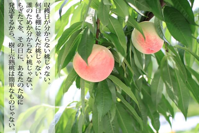 農家が知ってる完熟桃の美味しさを、農家直送で皆様にもお届けしたいから。
