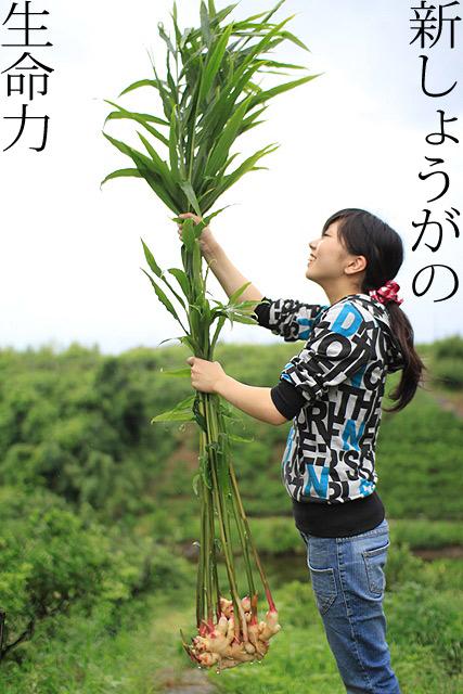 新しょうが 和歌山