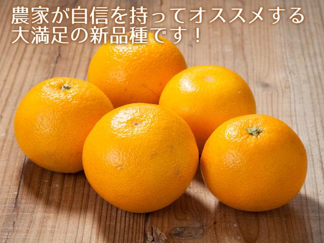 地元和歌山で誕生!清見×水晶文旦の新品種!春峰