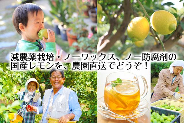 減農薬栽培・ノーワックス、ノー防腐剤の国産レモンを、農園直送でどうぞ!